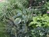 Shade Garden companions