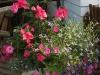 Container annuals