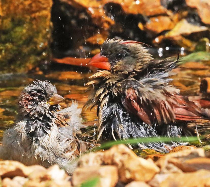 Birds at the Bubbler