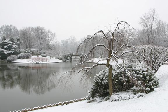 Japanese Garden in snow