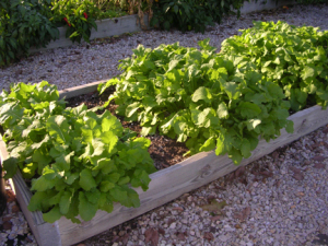 a picture of a raised bed vegetable garden