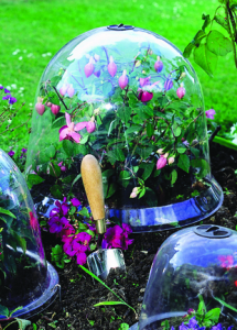 a picture of a cloche for warming plants in cold weather