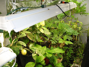 a picture of houseplants growing under grow lights