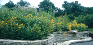 a picture of a native garden