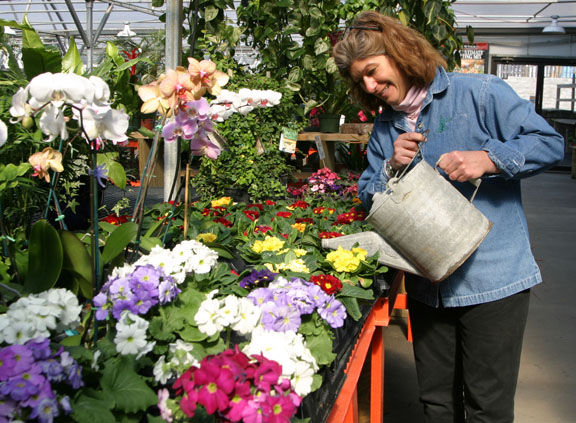 An image of a garden center employee watering flowers