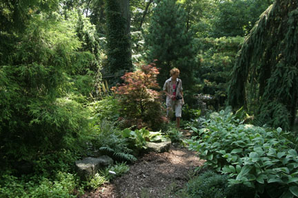 a picture of a shade garden featuring hostas, evergreens and other plants