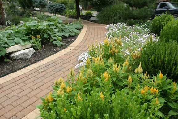 An image illustrating a mixed flower-and-vegetable bed