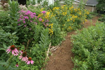 an image of a backyard native plant garden