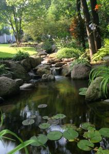 A photo of a water garden