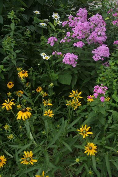 a picture of garden perennials