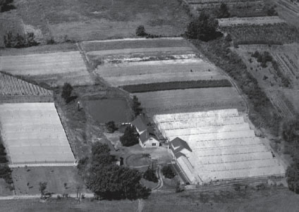 an aerial photo showing Tomasovic Greenhouses circa 1940s