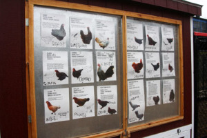 a picture of pictures of various types of chickens