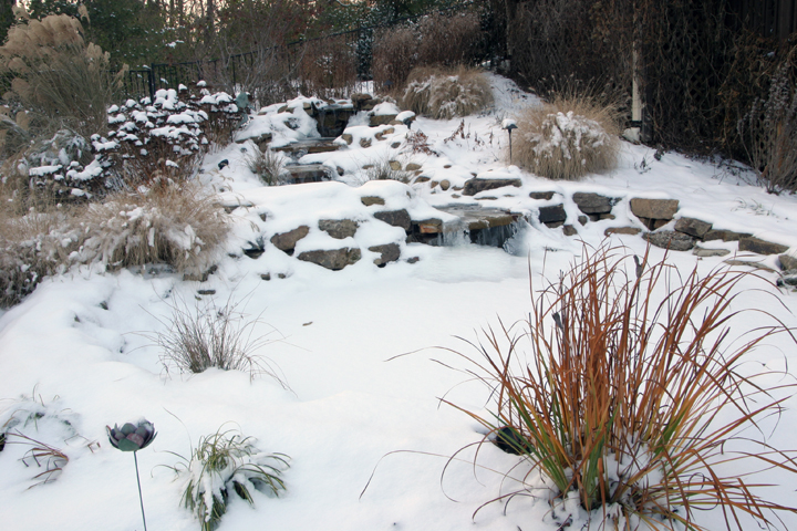 a picture of grasses in a winter garden