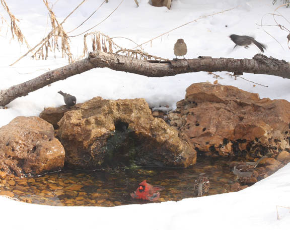 A picture of birds at a water bubbler in winter.