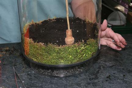 Steps in creating a terrarium