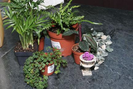 an image of terrarium accessories