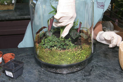 An image of making a terrarium with plants