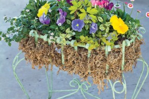 A picture of a Mexican greenwire planter with spring flowers.