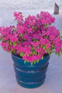 A picture of a ceramic planter