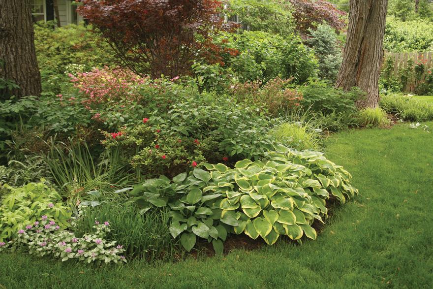 A photo of a shade garden.