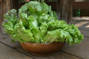 a picture of a bowl of harvested lettuce from the garden