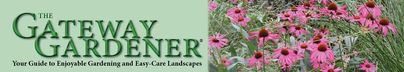 summer header coneflowers