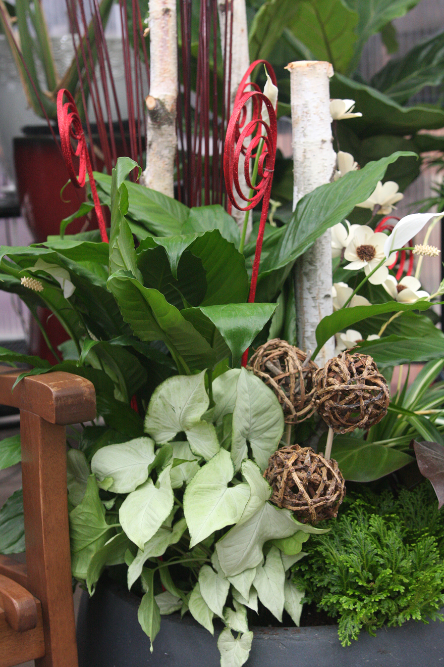 An image of a grouping of houseplants
