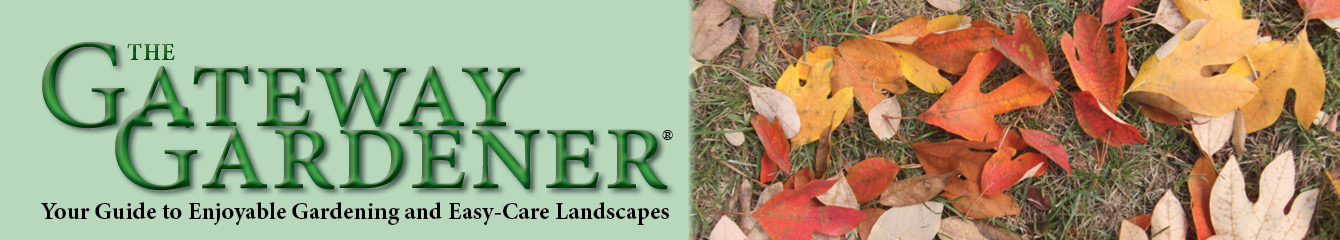 The header image of The Gateway Gardener magazine, featuring a picture of sassafras leaves.