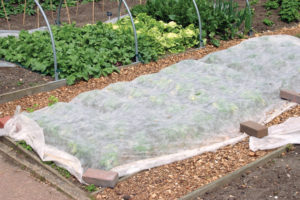 A photo of a row cover in a vegetable garden.