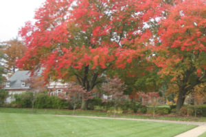 A photo of a lawn and trees with fall color.