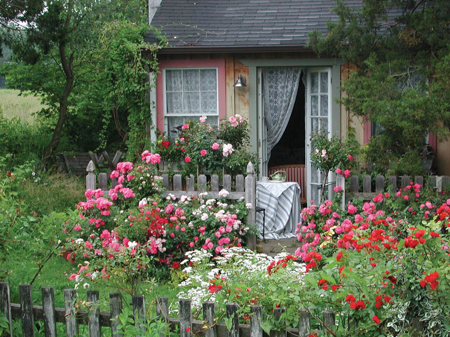 A picture of a cottage garden.