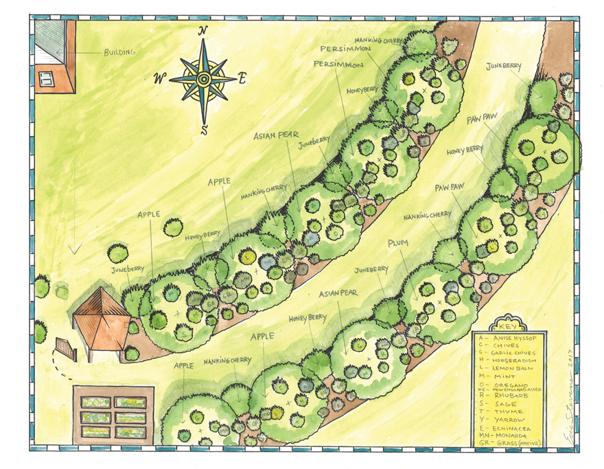 A design drawing of an edible landscape