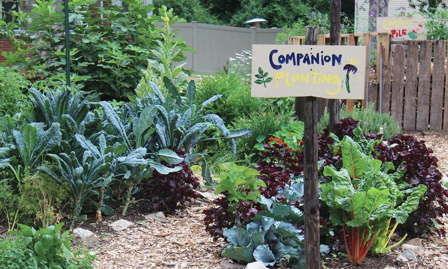 A photo of a greens garden