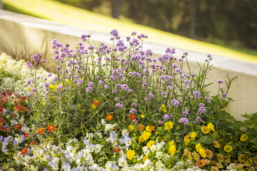 A picture of annuals in a container planting.