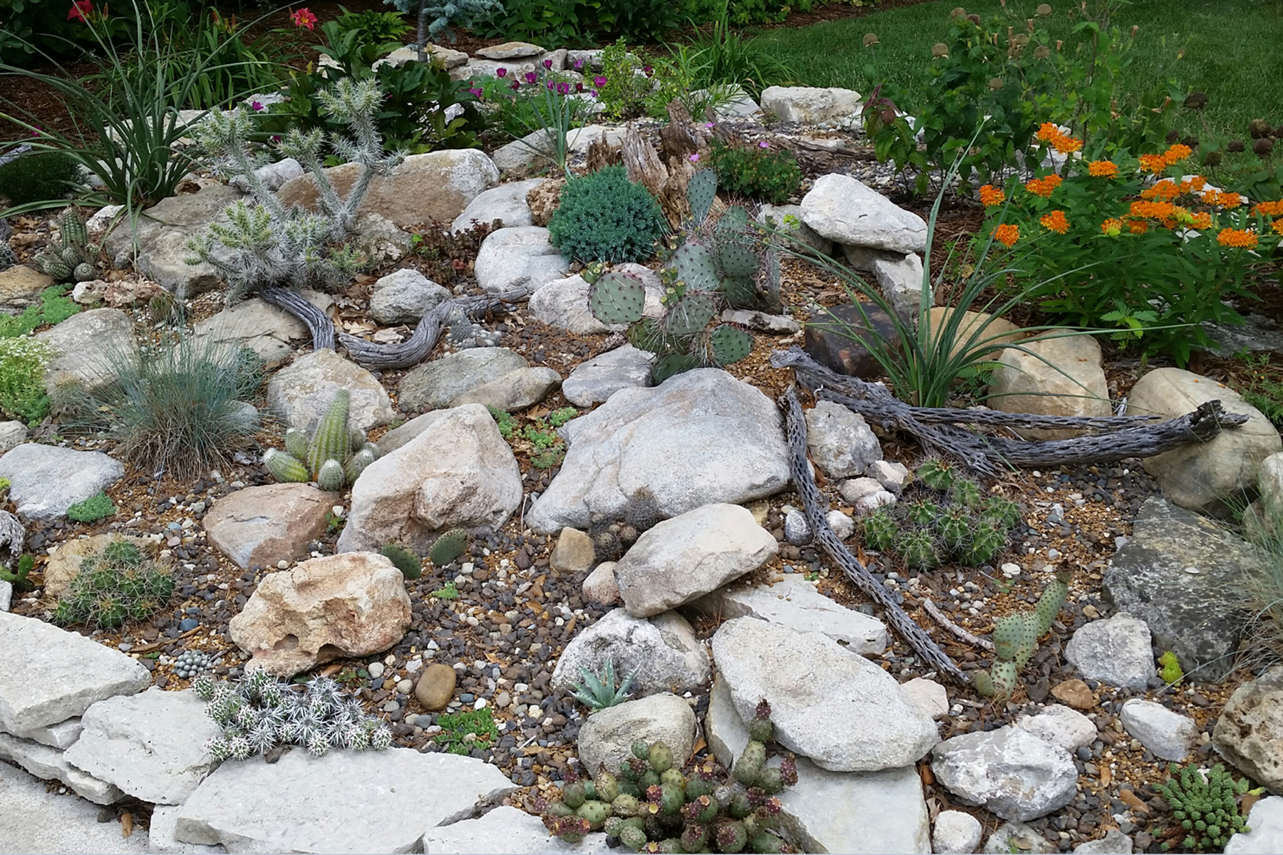 Cold Hardy Cactus And Succulent Gardening The Gateway Gardener