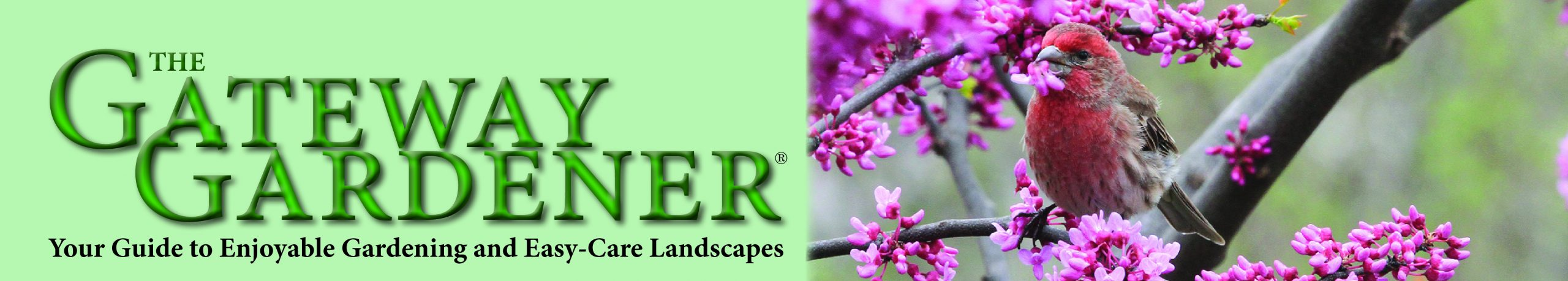 GatewayGardener.com home page header with house finch in redbud picture